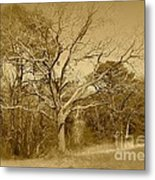 Old Haunted Tree In Sepia Metal Print