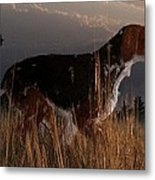 Old Hunting Dog Metal Print