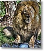 Old King Lion Metal Print