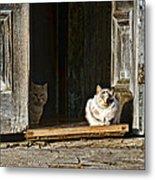 Old Knox Church Cats Metal Print