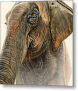 Old Lady Of Nepal 2 Metal Print by Aaron Blaise