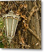 Old Lamp Hanging On Tree  Metal Print