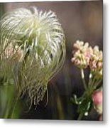Old Man's Beard Metal Print
