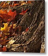 Old Maple Roots In Backlit Autumn Metal Print