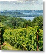 Old Mission Peninsula Vineyard Metal Print