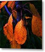Old Orange Leaves Metal Print
