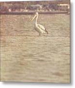 Old Pelican Photograph Metal Print