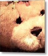 Old Photo Bear Metal Print