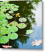 Old Pond - Featured 3 Metal Print
