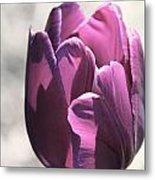 Old Purple Metal Print