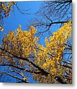 Old Rag Hiking Trail - 121217 Metal Print
