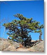 Old Rag Hiking Trail - 121238 Metal Print