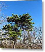 Old Rag Hiking Trail - 121242 Metal Print by DC Photographer