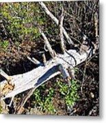 Old Rag Hiking Trail - 121243 Metal Print