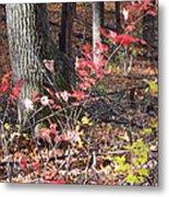 Old Rag Hiking Trail - 12125 Metal Print