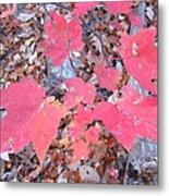 Old Rag Hiking Trail - 121261 Metal Print