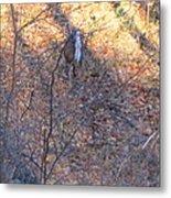 Old Rag Hiking Trail - 121264 Metal Print