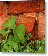 Old Red Wall Metal Print
