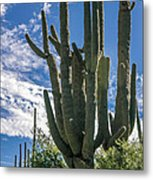 Old Saguaro At Ventana Canyon Metal Print
