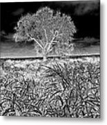 Old Texas Fields Metal Print