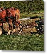 Old Time Horse Plowing Metal Print