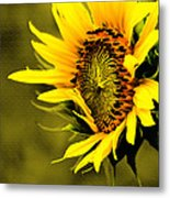 Old Time Sunflower Metal Print