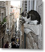Old Town Alley Cat Metal Print