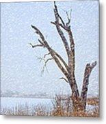 Old Tree In Winter Metal Print