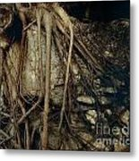 Old Tree On Broken Wall Metal Print by Yali Shi