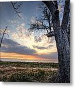 Old Tree Sunset Over Oyster Bay Metal Print