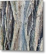 Old Tree Wrinkles Metal Print