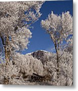 Old Wagon  Horse Frost And Jim Mountain   #3945 Metal Print