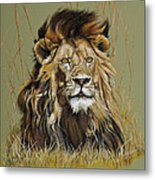 Old Warrior African Lion Metal Print by Mary Dove