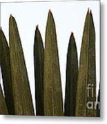 Olive Palm Metal Print