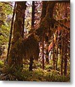 Olympic National Park - Rainforest Metal Print