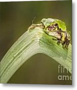 On A Leaf Metal Print by Timothy Hacker