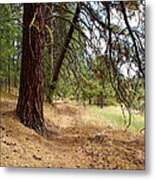 On A Trail From The Past To The Future Metal Print