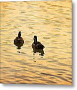On Golden Pond Ducks Metal Print