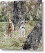 On Guard - Featured In Comfortable Art Group Metal Print
