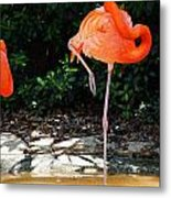 On Stilts Metal Print
