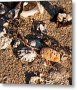 On The Beach 04 Metal Print