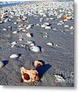 On The Beach Apple Murex Metal Print
