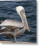 On The Edge - Brown Pelican Metal Print