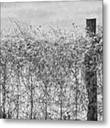 On The Fence Bw Metal Print