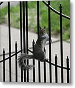 On The Fence Metal Print