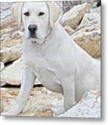 On The Lookout Metal Print by Suzanne Oesterling