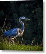 On The March Metal Print