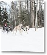 On The Race Trail Metal Print