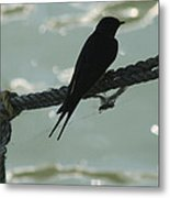 On The Ropes Metal Print by Sharon McLain