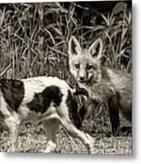 On The Scent Sepia Metal Print